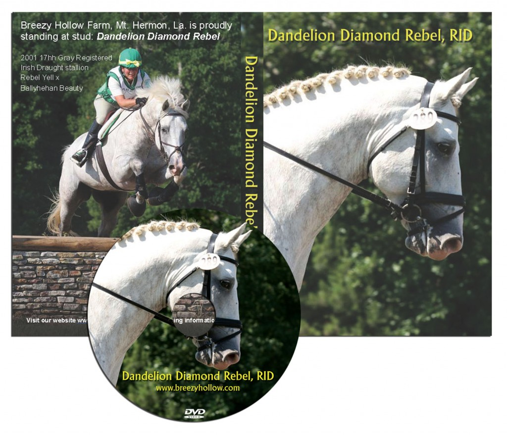horse dvd cover and disc